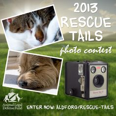 Enter the contest by submitting your rescued animal's photo & story to photocontest@aldf.org!