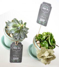 Succulent teacher gift