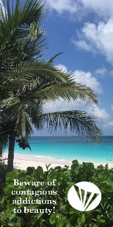 The beauty of the Harbour Island beaches and the Bahamas!