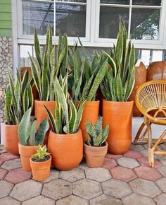 80 DIY Plant Stand Ideas To Fill Your Room With Greenery These trendy HomeDecor ideas would gain you amazing compliments. Check out our gallery for more ideas these are trendy this year. House Plants Decor, Plant Decor, Plantas Indoor, Snake Plant Care, Sansevieria Plant, Snake Plant Propagation, Sansevieria Trifasciata, Plant Aesthetic, Diy Plant Stand