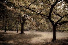 Eichenhain by Hartmut Haerer, via 500px