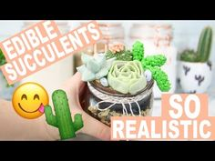 DIY Succulent Terrarium Cake Jars! How to Make Realistic Succulents out of Buttercream! - YouTube