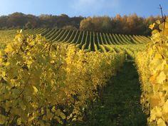 Traben-Trarbach Autumn 2015