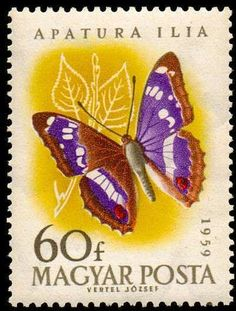 Postage Stamp Design, Jewel Colors, Vintage Stamps, Stamp Collecting, Beautiful Butterflies, Hungary, Butterfly, Purple, Fauna