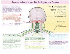 Neuro Auricular Technique for Stress. The version presented here with the six oils is the protocol done routinely in the Nova Vita Clinic in Guayaquil, Ecuador.