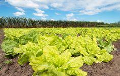 Caixa anuncia oferta de R$ 6 bilhões para crédito rural -   A Caixa Econômica Federal anunciou hoje (10) a oferta de R$ 6 bilhões para a linha de Custeio Antecipado, que fornece crédito para o produtor rural. A medida possibilita o acesso a recursos para custear as lavouras no plantio da Safra Verão 2017/2018 em 270 dias antes do cultivo.  A lin - http://acontecebotucatu.com.br/nacionais/caixa-anuncia-oferta-de-r-6-bilhoes-para-credito-rural/