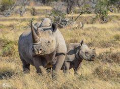 Eastern Black Rhino 740 left #RacingExtinction