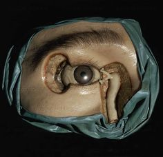AGE OF REASON WAX MODEL 18TH  Eye and tearduct, wax model by Anna Morandi Manzolini  University, Bologna, Italy