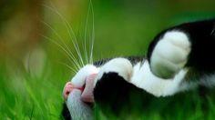 cat in grass (beautiful photo ^^)
