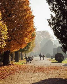 Wszystkie posty • Instagram Top Photo, Photo S, Best Instagram Photos, Instagram Posts, Beautiful Park, Fall Photos, Top View, Vienna, Photography Tips