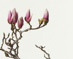 鞆岡隆史による花のポートレート | DA