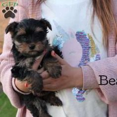 Tiny Puppies For Sale, Yorkie Puppy For Sale, Greenfield Puppies, Yorkshire Terrier Puppies, New Holland, Cute Dogs, Yorkies, Pets, Animals