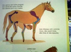 This helpful diagram of a horse's anatomy in a French kids' book. | 19 Unintentionally Disturbing Moments From Kids' Books