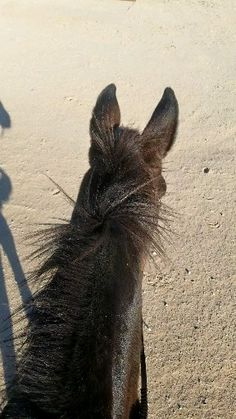 Alternative Horsemanship with Samantha Harvey Remote Horse Coach Samantha Harvey, Horse Behavior, Cap Girl, Horse Videos, Sunset Quotes, Aesthetic Movies, Cute Horses, Story Video, Show Jumping