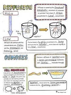 Diffusion and Osmosis Sketch Notes, Activities, & PPT - Biologie - Bildung Gcse Biology Revision, Study Biology, Biology Lessons, Science Biology, Teaching Biology, Life Science, Biology Teacher, Cell Biology, Ap Biology