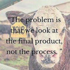 El problema es que vemos el producto final, no el proceso. #meat #dairy #eggs #animal #exploitation