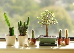 I need that mini bonsai.....Mini cacti garden