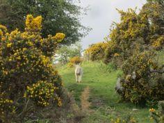 #photography #lakedistrict #nature #england