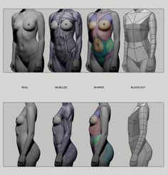 Female Torso by Anatomy from Sculptors