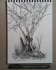 Lidia Barragán. #sketch #tree #nature #sketchbook #treedrawing #fineline…