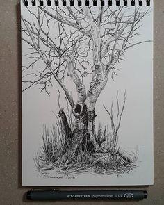 Lidia Barragán. #sketch #tree #nature #sketchbook #treedrawing #fineline #steadtler #dibujo #árbol #cuaderno