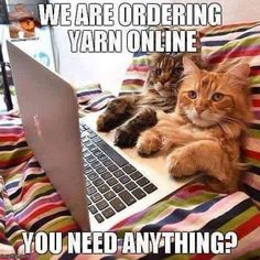 These cats would be perfect for me, cuddles and yarn buyers
