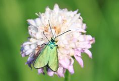 Metallic green butterfly wings, Public Domain Photos, Free Images for Commercial Use Green Butterfly, Butterfly Wings, House Insects, Public Domain, Free Images, Butterflies, Commercial, Metallic, Creatures