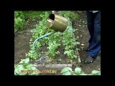 Бяка, жидкое зелёное удобрение - YouTube