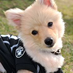This fuzzy fan is ready for Oakland Raiders game day. Who's ready for some football?