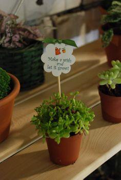 www.dreamgardens.ro//plante marturii evenimente, plante in ghivece, decoratiuni ghivece, aranjamente plante in ghivece, mini plante, ghivece colorate, ghivece metalice, galetuse ghivece, plante Craciun, Craciunite, decor iarna, decoratiuni masa Craciun.  //Christmas plants, christmas table decor, christmas arrangements, pot plants, plants favors, plants decor, coloured pots, mini plants, plant wedding favors, garden indoor, gardening, garden love, garden baskets.