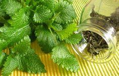 A citromfű (Melissa officinalis) - a karmelitavíz fő hatóanyaga - Boldognapot. Plantar, Health And Beauty, Cabbage, Plant Leaves, Diet, Vegetables, Food, Decor, Medicinal Herbs