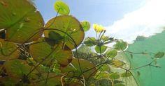 7 mooiste Haagplanten - KleineTuinen.nl Prunus, Underwater, Roots, Plant Leaves, Lily Pad, Sketching, Google Search, Gardens, Green Algae