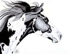 Overo Paint Horse Drawing by Cheryl Poland - Overo Paint Horse Fine ...