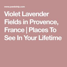 Violet Lavender Fields in Provence, France | Places To See In Your Lifetime