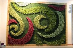 This is all about art and innovations. Look at this whirlpools art green wall created by Sunwing artificial hedge!