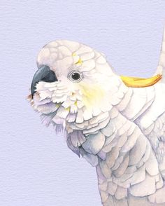 Cockatoo Print C179DL cockatoo print of watercolor by Whizzprints