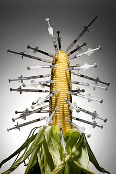 The allergic effects of GMO'd corn. (Photo: Jon Shireman/Getty Images)