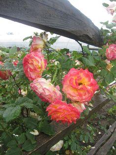 91 Best Facebook Posts Images White Flower Farm Facebook Photos