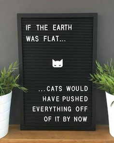 New Cats Quotes Letterboard Ideas Humour Wtf, Crazy Cat Lady, Crazy Cats, Funny Signs, Funny Jokes, Funny Cat Quotes, Humor Quotes, Cats Funny Sayings, Cat Qoutes