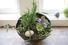 ⧓: Plants for the house