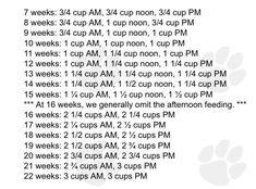 Puppy Feeding Schedule, Puppy Schedule, Puppy Training Schedule, Dog Training, Golden Labrador Puppies, Golden Puppy, Black Labrador, Retriever Puppy, Dogs Golden Retriever