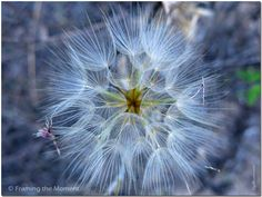 Summer Mandala | Original Nature Fine Art Photography | Shapes in Nature |  Framing the Moment ... by Sigal Krumer