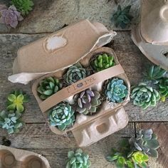 Succulent Cutting Starter Kit packaged in adorable Kraft egg cartons by VerticalFlora on Etsy. #giftingmadeeasy