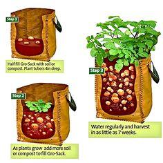 * Bag - potatoes - Photo Tio Miguelito's Garden -   Container Gardening blog