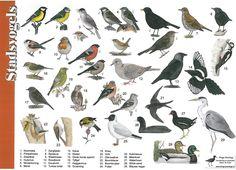 Zoekkaart stadsvogels, leuk om te doen met kinderen