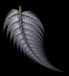 New Zealand silver fern Cyathea dealbata Fern Tattoo, I Tattoo, Plant Tattoo, Tattoo Drawings, Maori Designs, Tattoo Designs, Long White Cloud, Zealand Tattoo, Silver Fern