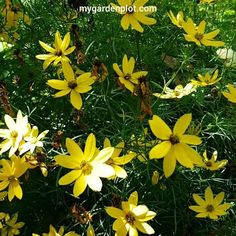Florida Landscaping, Landscaping Plants, Garden Yard Ideas, Garden Paths, Blooming Flowers, All Flowers, Flower Phone Wallpaper, Garden Maintenance, Hardy Perennials