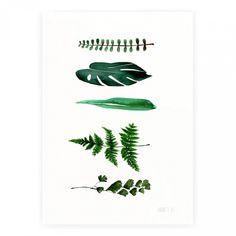 Annemette Klit är konstnären bakom varumärket The Clay Play. Hennes Leaf No.537 är en akvarell i vackert gröna toner på matt strukturerat papper av högsta kvalitet. Affischen har storlek A2.