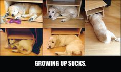 Known a few animals to do this. Too cute!