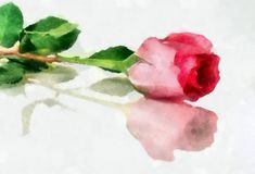 A Rose is a Rose... by Brush & Lens (watercolor) Print available for purchase